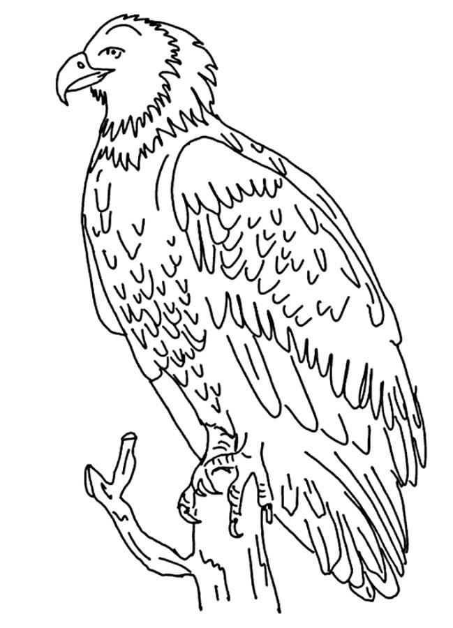 AmericanEagle Coloring Page
