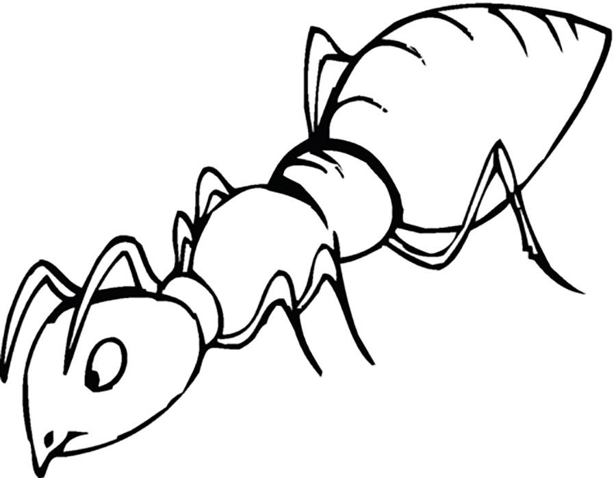картинки черно белого муравья нас