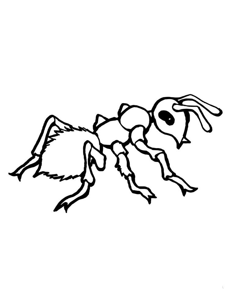 Цветы, муравей картинка для детей раскраска