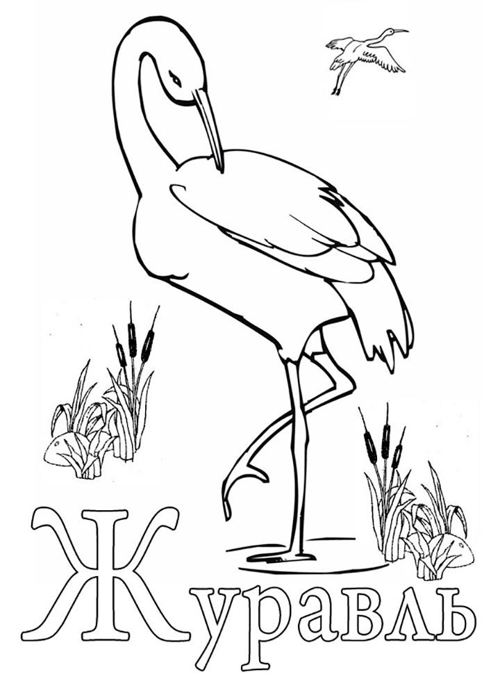 белые журавли раскраска полета голубей дальних