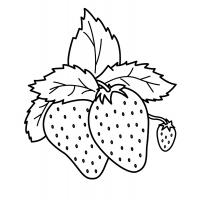 Раскраски ягоды скачать и распечатать