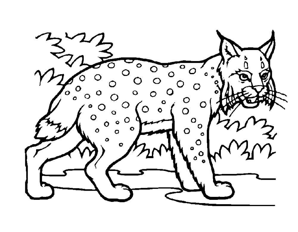 воспоминаниям современников, раскрасить картинку животного из красной книги никогда