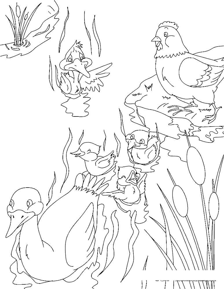 Раскраска сказка Гадкий утенок скачать и распечатать