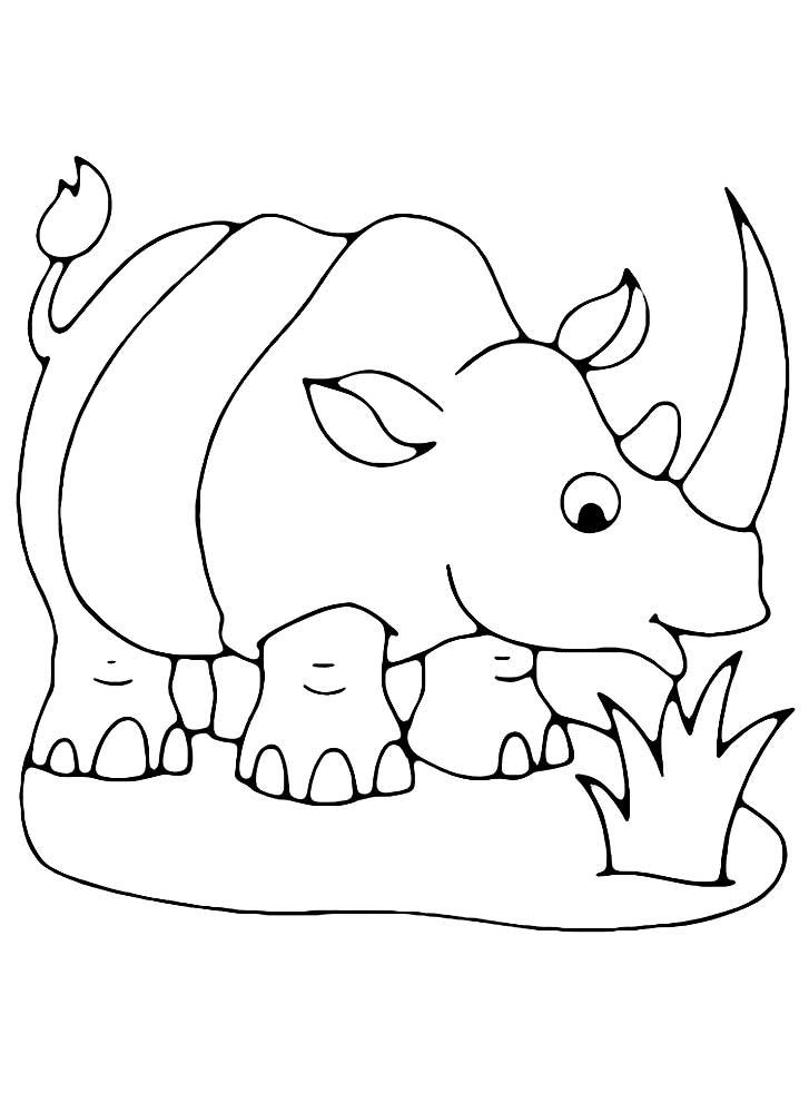 фото раскраска носорог распечатать чаще