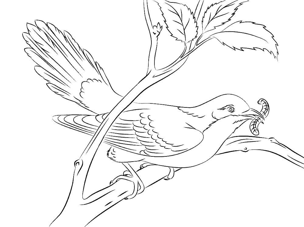 Рисунок карандашом кукушка картинки