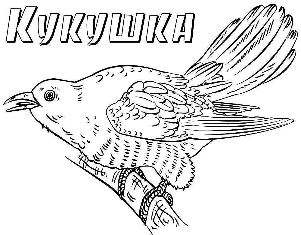 Картинки птиц с названиями распечатать