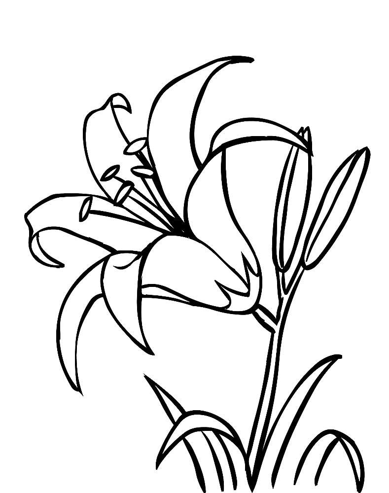 Картинка рисунок цветы, годовщиной