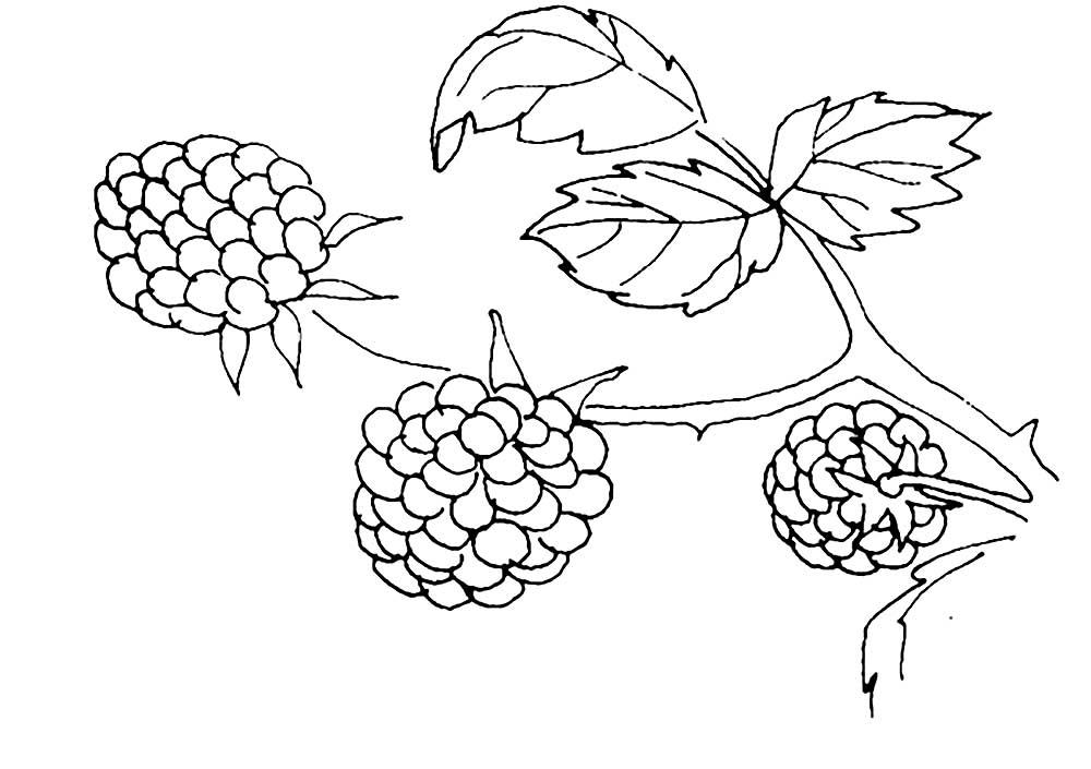 Раскраска для детей ягода малина
