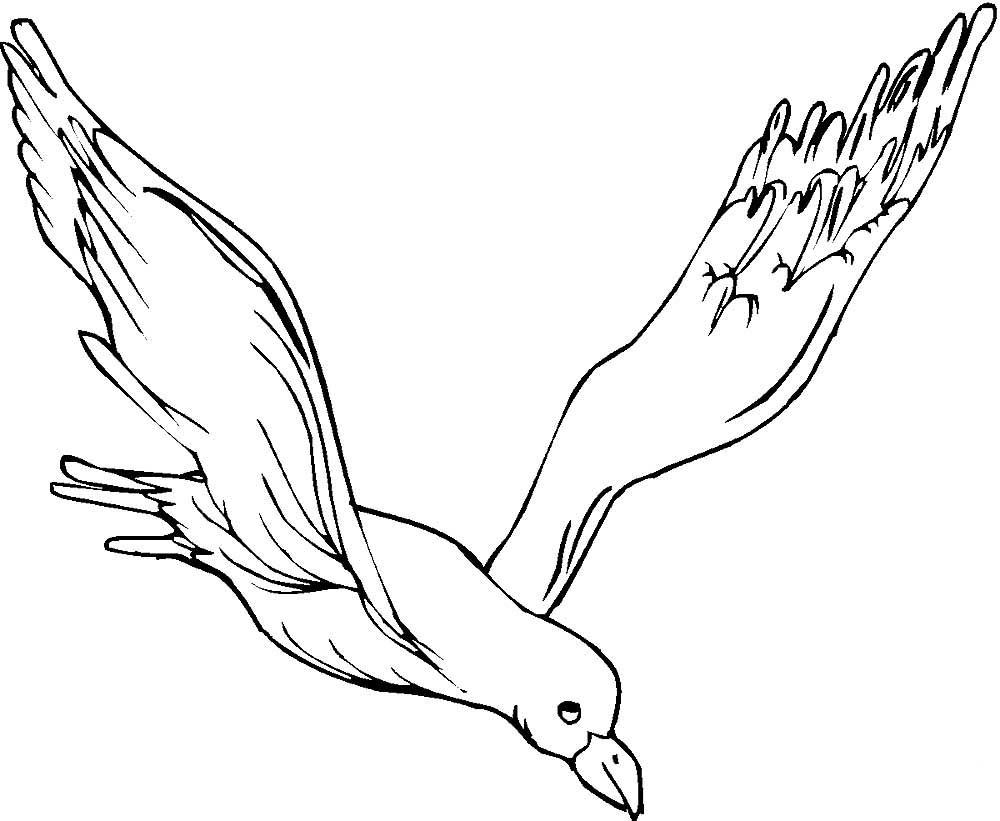 картинки летящей птички карандашом евгений