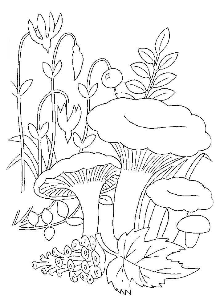 Раскраски грибы лисички скачать и распечатать