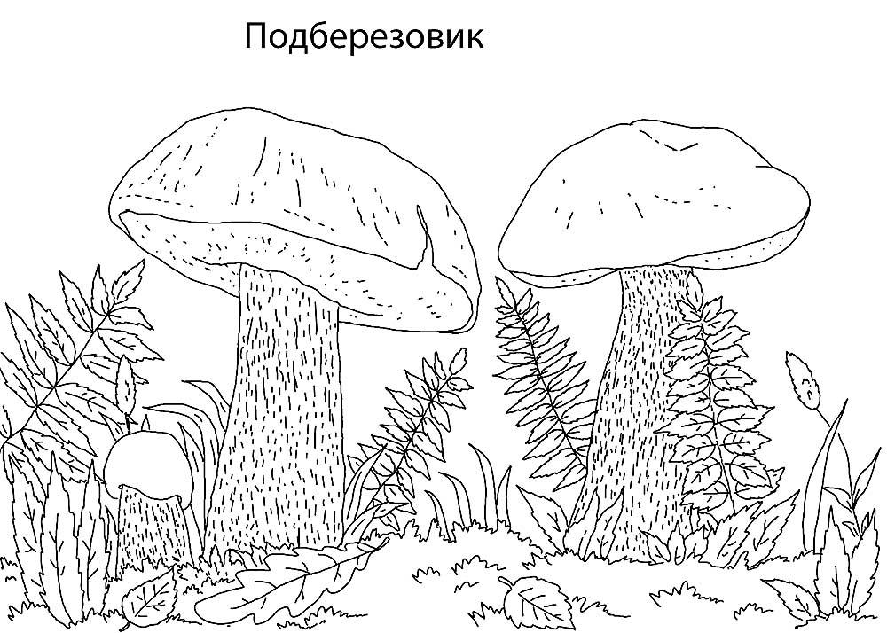 картинки грибов для раскрашивания подосиновик пестрит