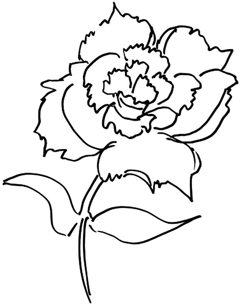Картинки, цветы к 9 мая картинки раскраски
