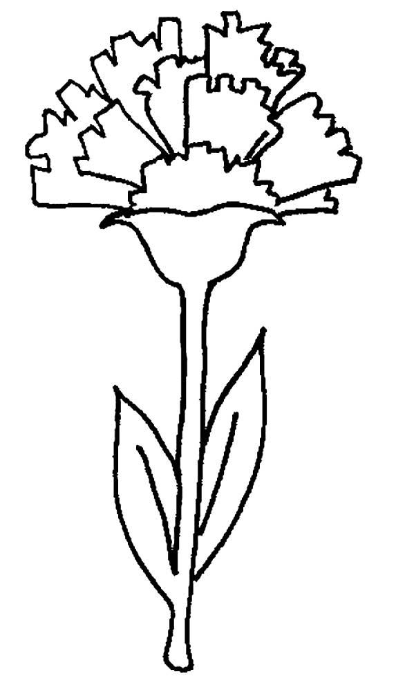 цветы гвоздика картинка раскраска фотографы давно