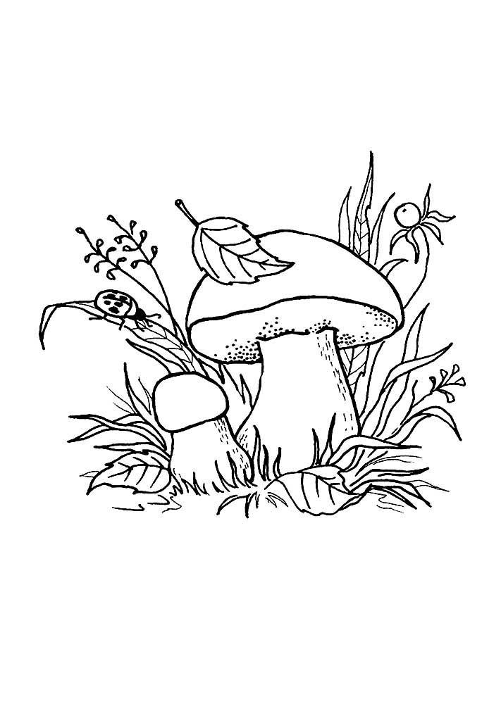 Раскраски гриб скачать и распечатать