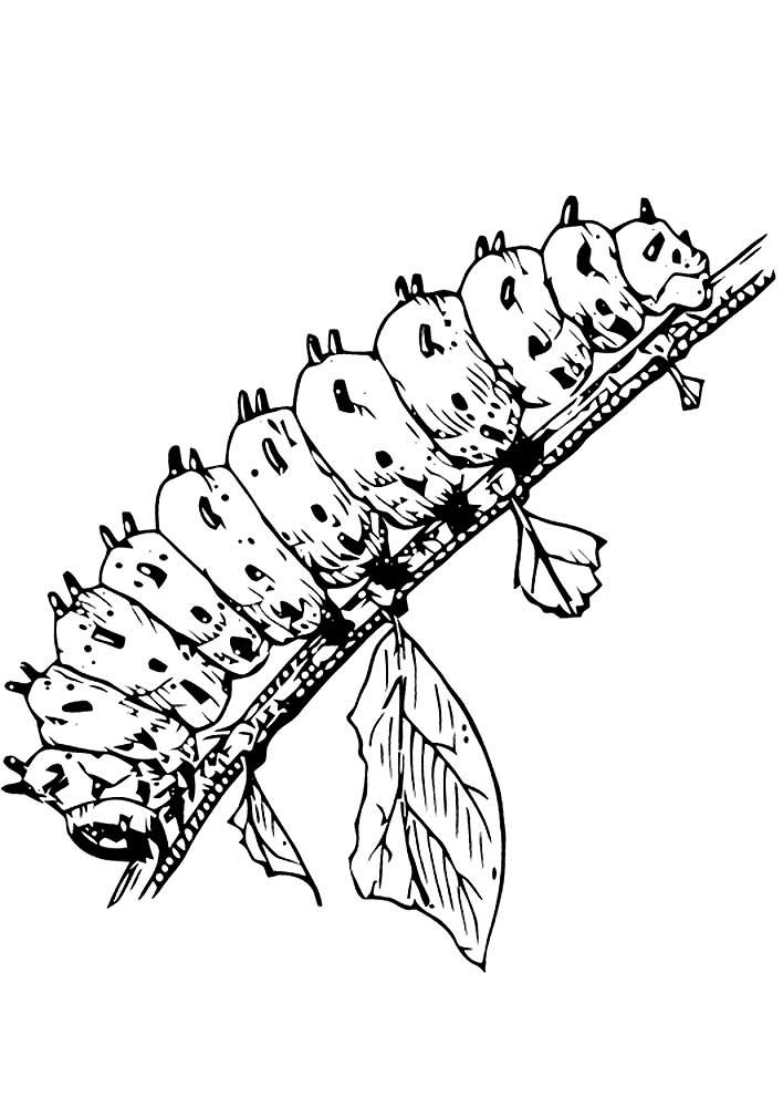 Смешная гусеница рисунок карандашом