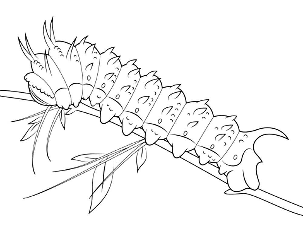 Одноклассниках, смешная гусеница рисунок карандашом