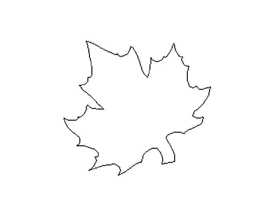 лист клён фото