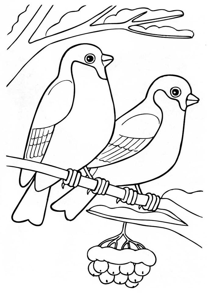 Раскраски для детей на тему птицы