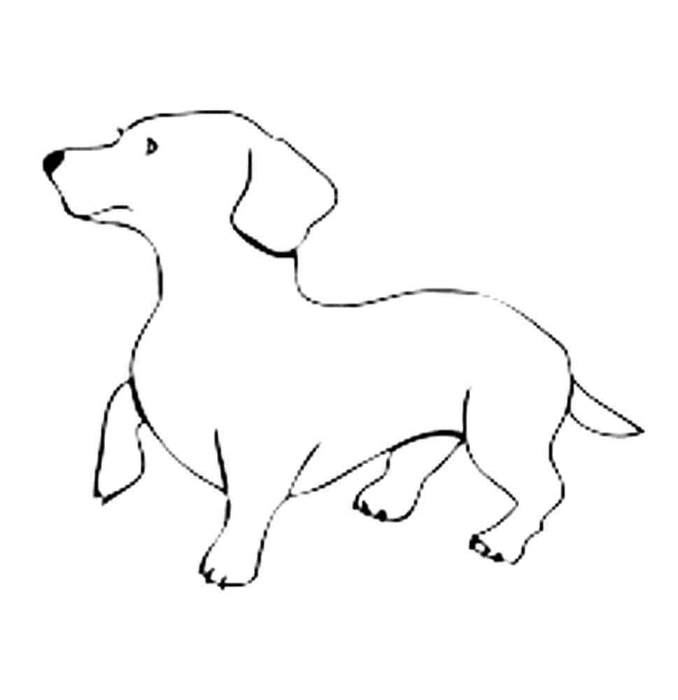 dog bone outline