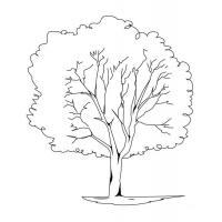 Раскраски деревья леса