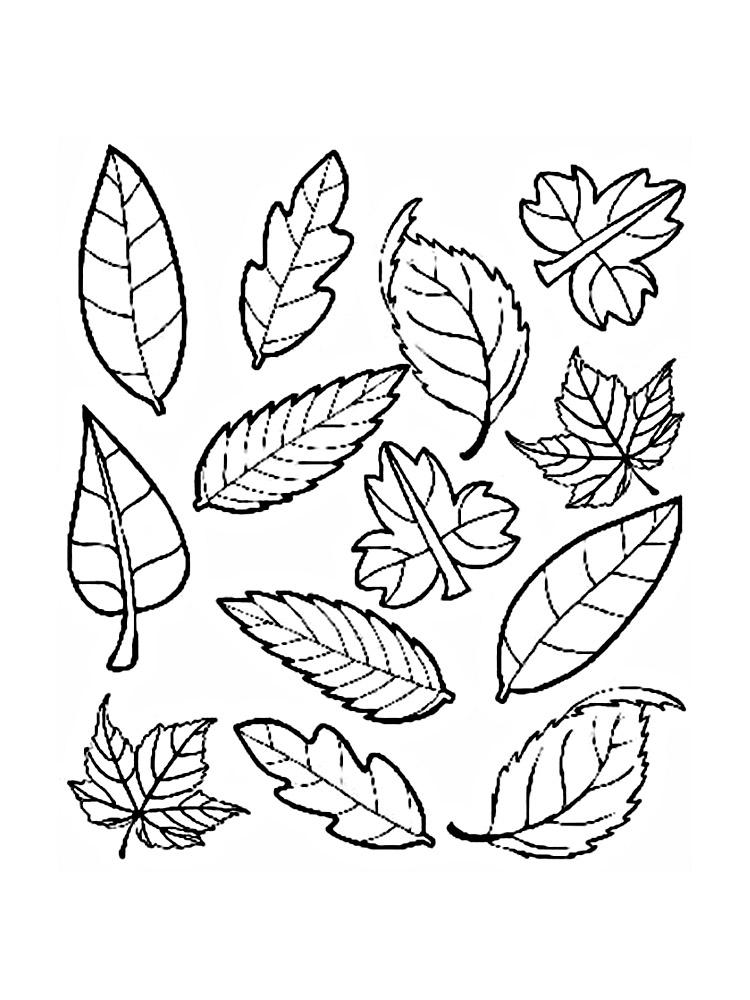 картинки раскраски листья деревьев