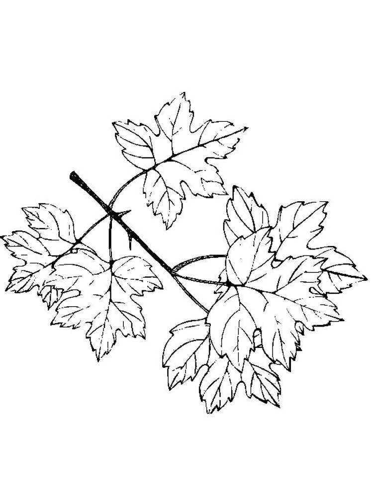 листья деревьев раскраски картинки